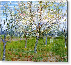 Van Gogh The Pink Orchard Acrylic Print by Vincent Van Gogh