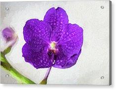 Vanda Orchids Pachara Delight Acrylic Print