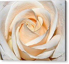 Vanilla Cream Acrylic Print