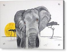 Vanishing Elephant Acrylic Print