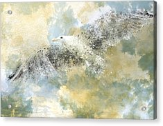 Vanishing Seagull Acrylic Print