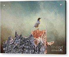 Acrylic Print featuring the photograph Varied Thrush On A Dead Tree by Eva Lechner