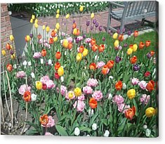 Variety Of Color Acrylic Print