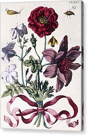 Various European Insects And Flowers Acrylic Print by Maria Sibylla Graff Merian