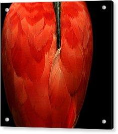 Vase-shaped Bird Acrylic Print by Emanuel Tanjala