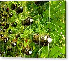 Vegetable Growing In Used Water Bottle 5 Acrylic Print