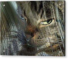 Acrylic Print featuring the photograph Veiled Insolennce by Irma BACKELANT GALLERIES