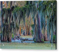 Unveiling The Secrets Of Da Swamp At Cypress Island Preserve Acrylic Print