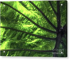 Veins Of An Elephant Leaf Acrylic Print by Photo Captures by Jeffery
