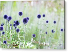 Veitchs Blue Acrylic Print by Tim Gainey