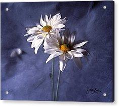 Velvet Daisies Acrylic Print by Jack Eadon