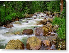 Acrylic Print featuring the photograph Velvet Green Forest by Tim Reaves