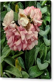 Velvet In Pink And Green Acrylic Print by RC deWinter