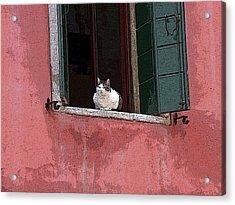 Venetian Cat In Window Acrylic Print