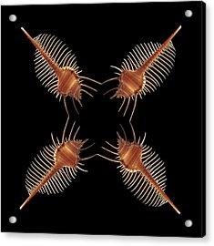 Venus Comb Geometric Acrylic Print by Gary Cloud