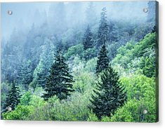 Verdant Forest In The Great Smoky Mountains Acrylic Print