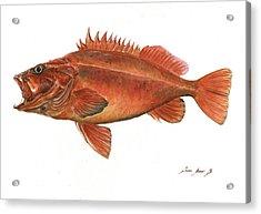 Vermilion Rockfish Acrylic Print