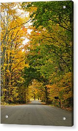 Vermont Foliage Acrylic Print by Mandy Wiltse
