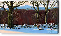 Vermont Stone Wall Acrylic Print by Frank Wilson