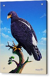 Verreaux's Eagle  Acrylic Print by Anthony Mwangi
