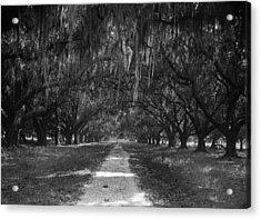 Versailles Oaks Acrylic Print