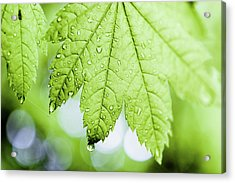 Vert Acrylic Print