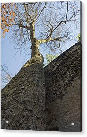 Acrylic Print featuring the photograph Vertical by Alan Raasch