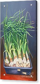 Vertical Scallions Acrylic Print by Natasha Harsh