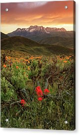 Vertical Timp With Wildflowers Acrylic Print