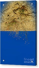 Vertigo II Acrylic Print by Jasna Buncic