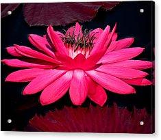 Very Pink Acrylic Print by Rosalie Scanlon