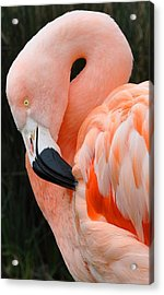 Very Pretty Bird Acrylic Print