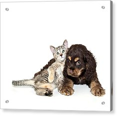 Very Sweet Kitten Lying On Puppy Acrylic Print by StockImage