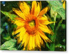 Very Wild Sunflower Acrylic Print