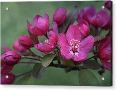 Acrylic Print featuring the photograph Vibrant Blooms by Ann Bridges