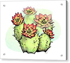 Vibrant Flower 6 Cactus Acrylic Print