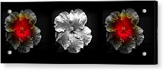 Vibrant Flower Series 3 Acrylic Print by Jen White
