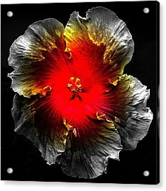 Vibrant Flower Series Acrylic Print by Jen White