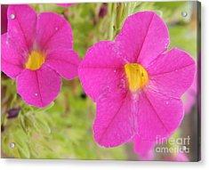 Vibrant Flowers Acrylic Print