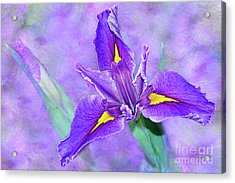 Acrylic Print featuring the photograph Vibrant Iris On Purple Bokeh By Kaye Menner by Kaye Menner