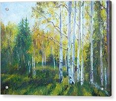 Vibrant Landscape Paintings - Arizona Aspens And Pine Trees - Virgilla Art Acrylic Print by Virgilla Lammons