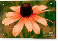 Vibrant Orange Coneflower Acrylic Print by Judy Palkimas