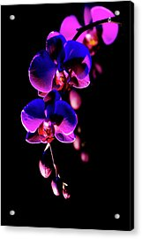 Acrylic Print featuring the photograph Vibrant Orchids by Ann Bridges