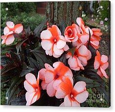 Plumerias Vibrant Pink Flowers Acrylic Print