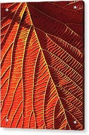 Vibrant Viburnum Acrylic Print