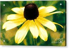 Vibrant Yellow Coneflower Acrylic Print by Judy Palkimas