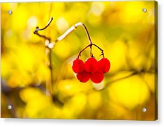 Acrylic Print featuring the photograph Viburnum Berries - Natural Olympic Emblem by Alexander Senin
