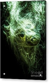 Victim Of Prey Acrylic Print by Jorgo Photography - Wall Art Gallery
