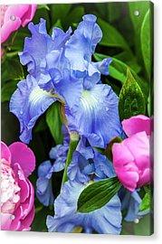 Victoria Falls Iris Acrylic Print