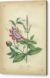 Victorian Botanical Illustration Of Passion Flower And Spearmint Acrylic Print by Peacock Graphics